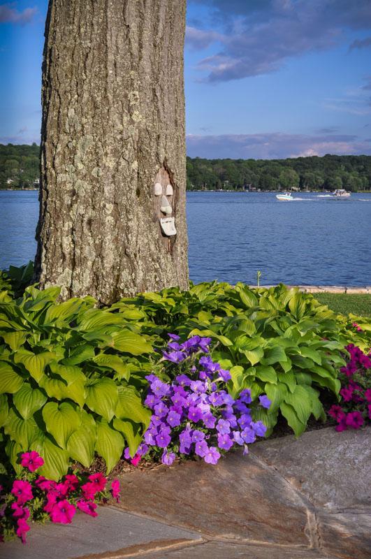 petunias and fragrant hosta planted around tree - nj