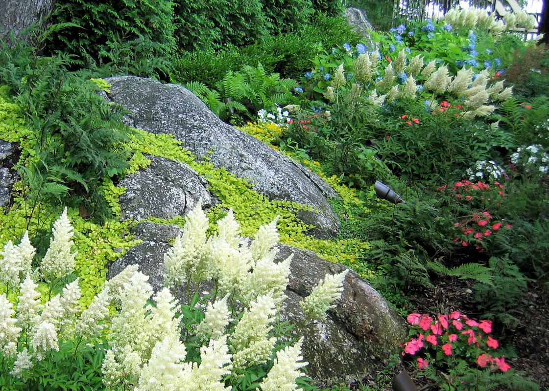 shade garden, astilbe, ferns, and hydrangea - nj