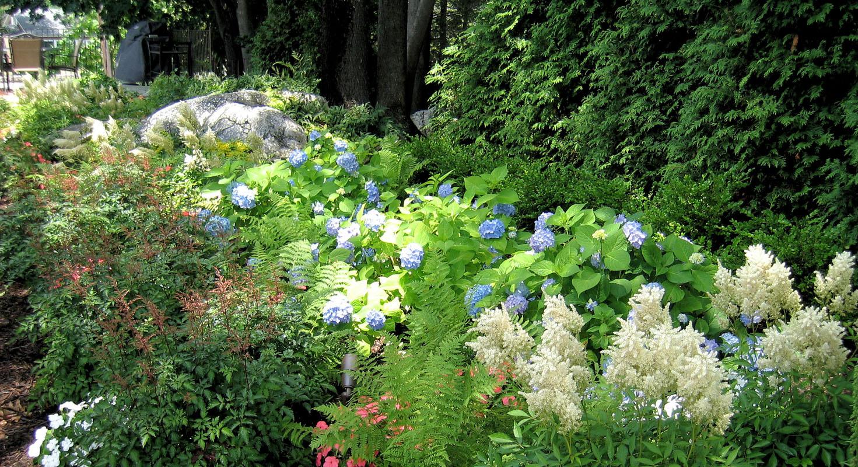 shade garden in nj
