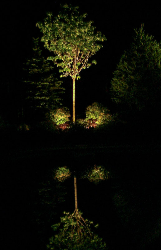 uplighting as part of nj landscape lighting
