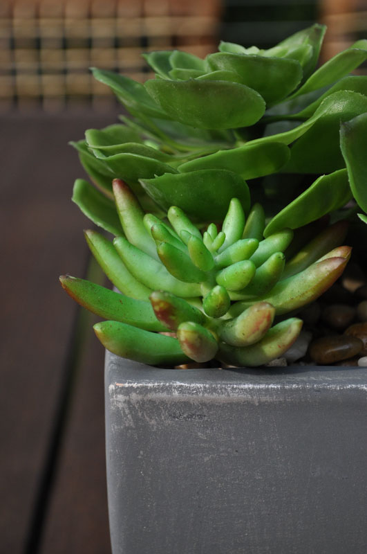 succulent in planter on deck table - north jersey