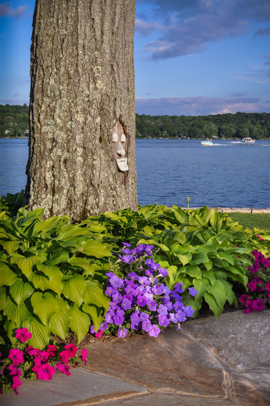 petunias, fragrant hosta, planting design on greenwood lake