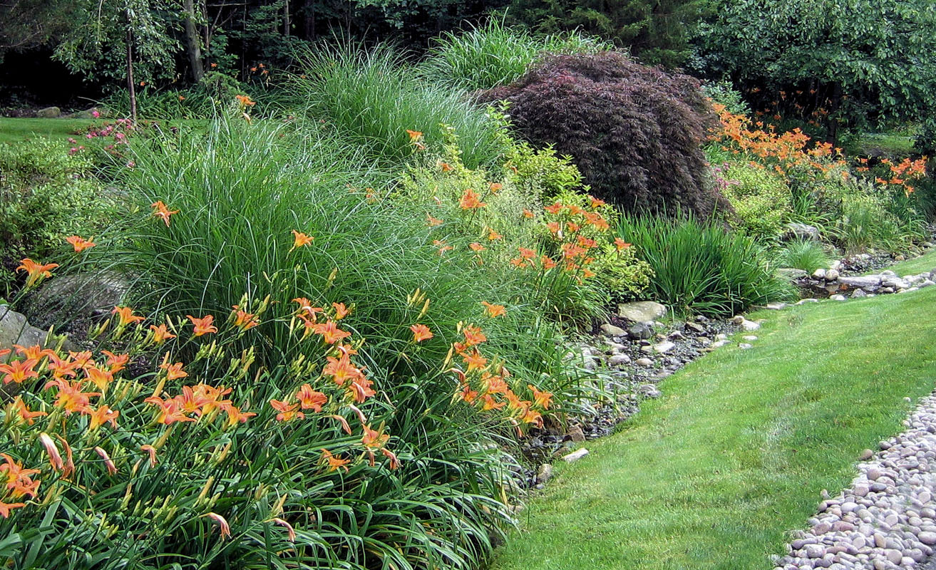 orange daylily, nj planting design