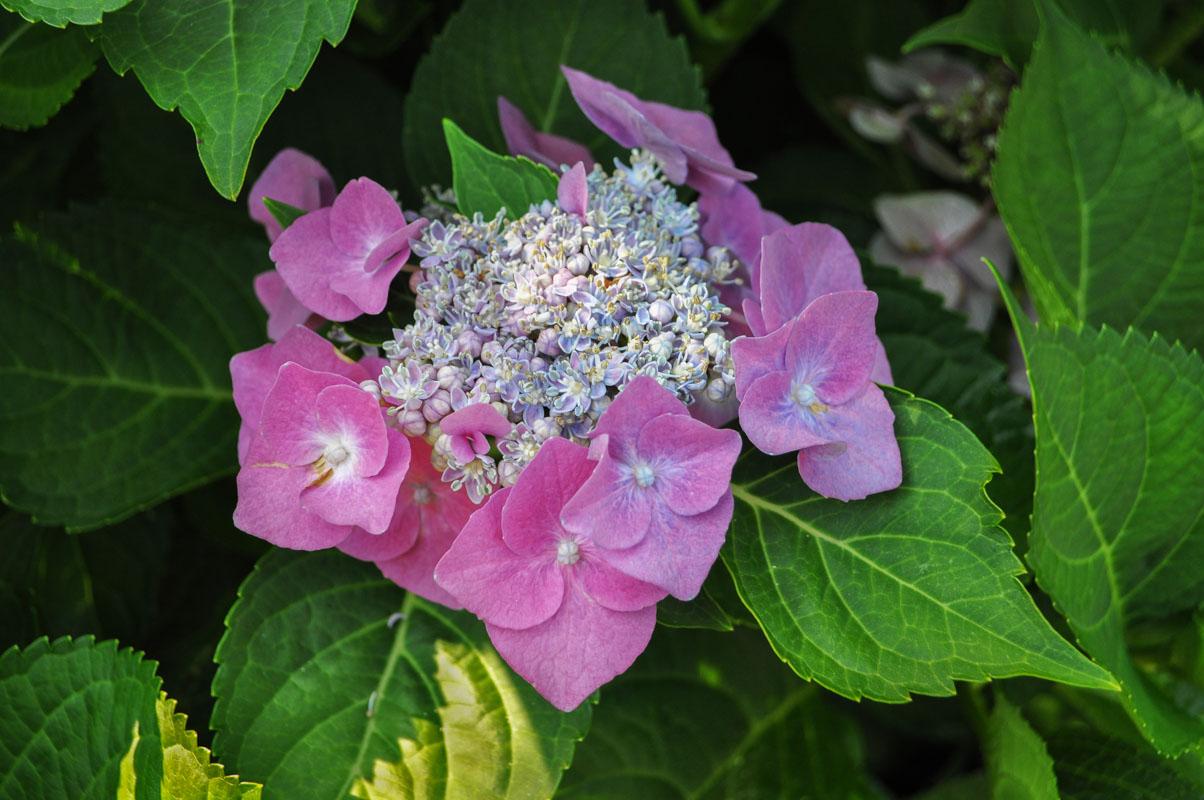 horticulture program