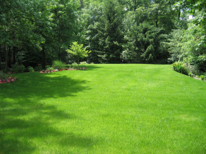 lush green lawn, nj landscape design - north jersey