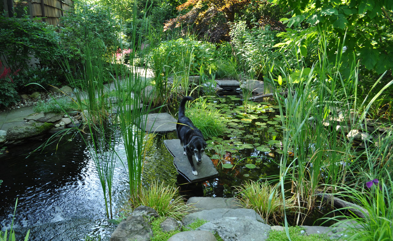 Stepping Stones in Pond Create Walkway