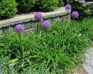 wall_new jersey_clc_landscape_design_41