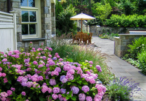 Hydrangeas and Patio by CLC Landscape Design