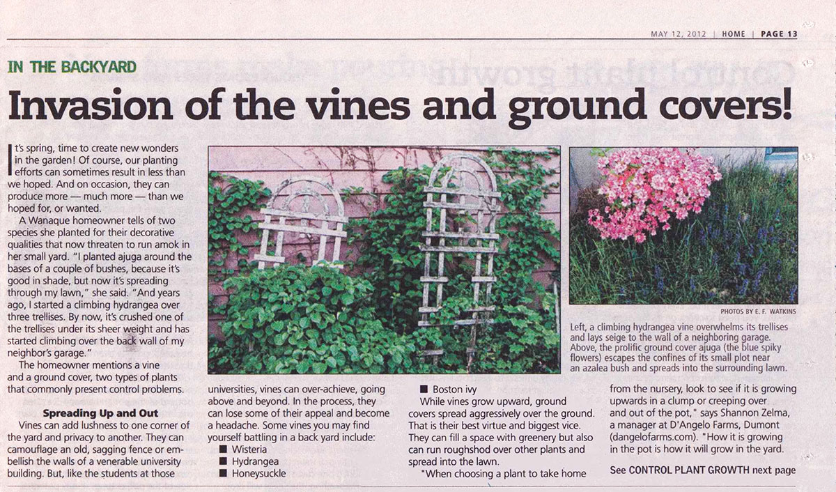 The Record - Dealing With Vines & Ground Covers (page 1)