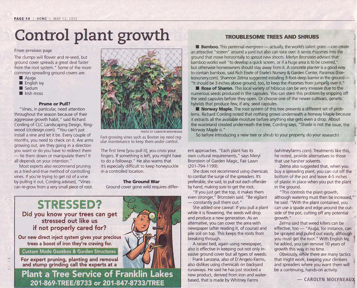 The Record - Dealing With Vines & Ground Covers (page 2)