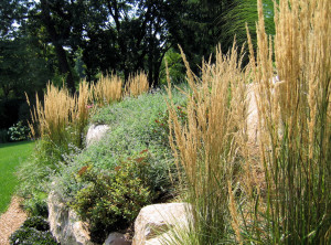 Deer Resistant Ornamental Grass Plants