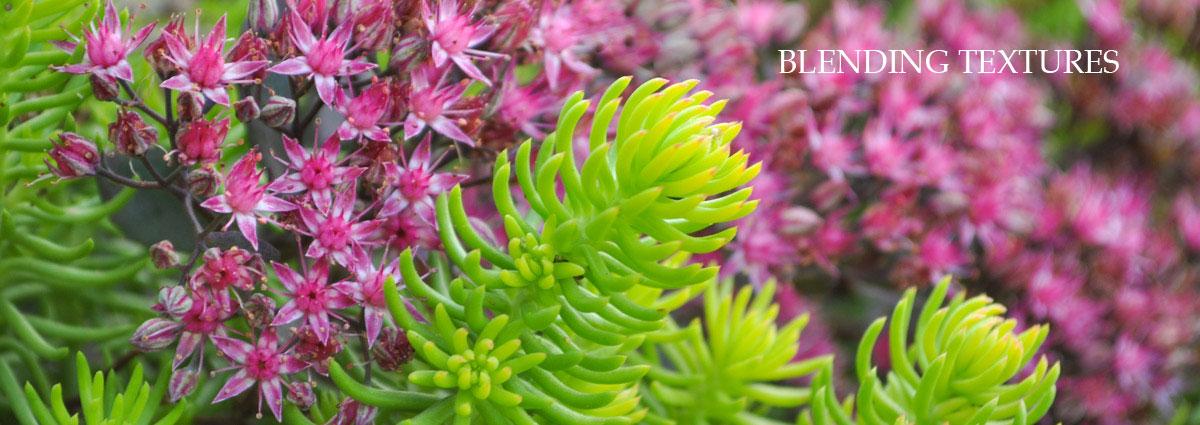 blending textures garden