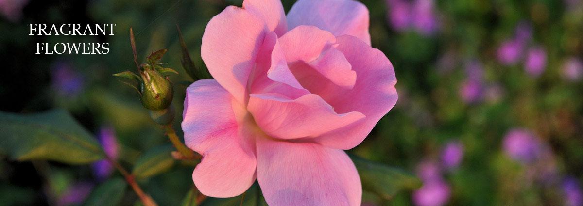 rose garden, nj