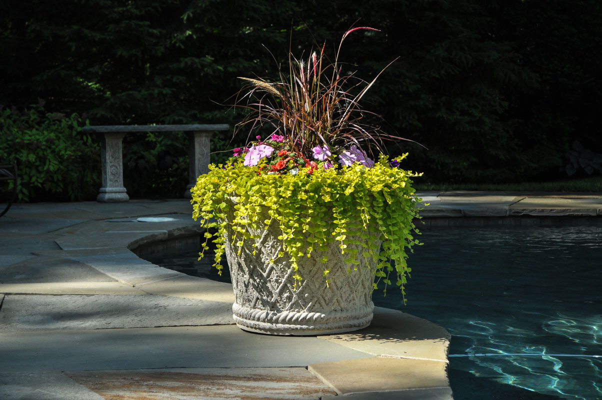 container plant on pool patio