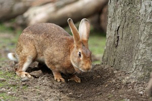 prevent rabbits eating plants