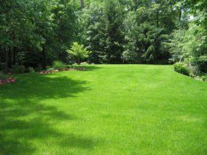 lush green lawn, nj landscape design - north jersey