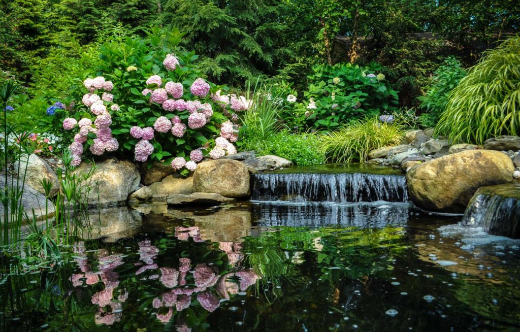 small waterfall in water garden, surrounded by hydrangea and hakone grass - north jersey