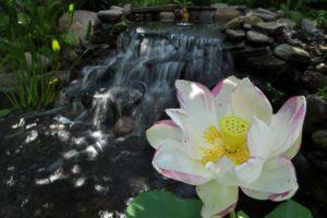 Landscape Design, pond